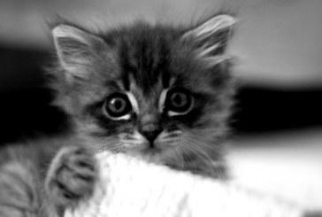 Kočičí web s Kittify